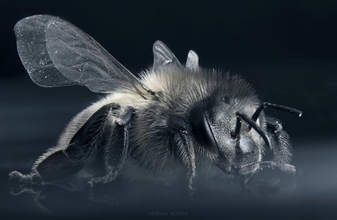 Adrian Borda Honey Bee