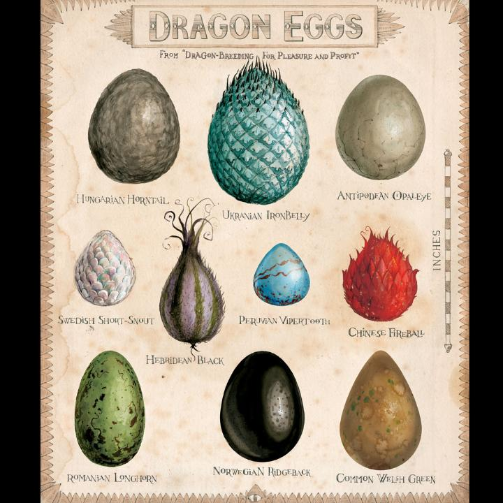 Harry Potter Dragon Eggs